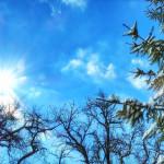 Foto eines blauen Himmels im Wald