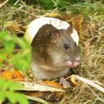 Foto von einer Maus