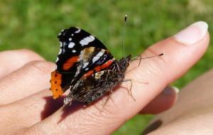 Beende Dein Raupen-Dasein und werde zum Schmetterling: leicht und frei