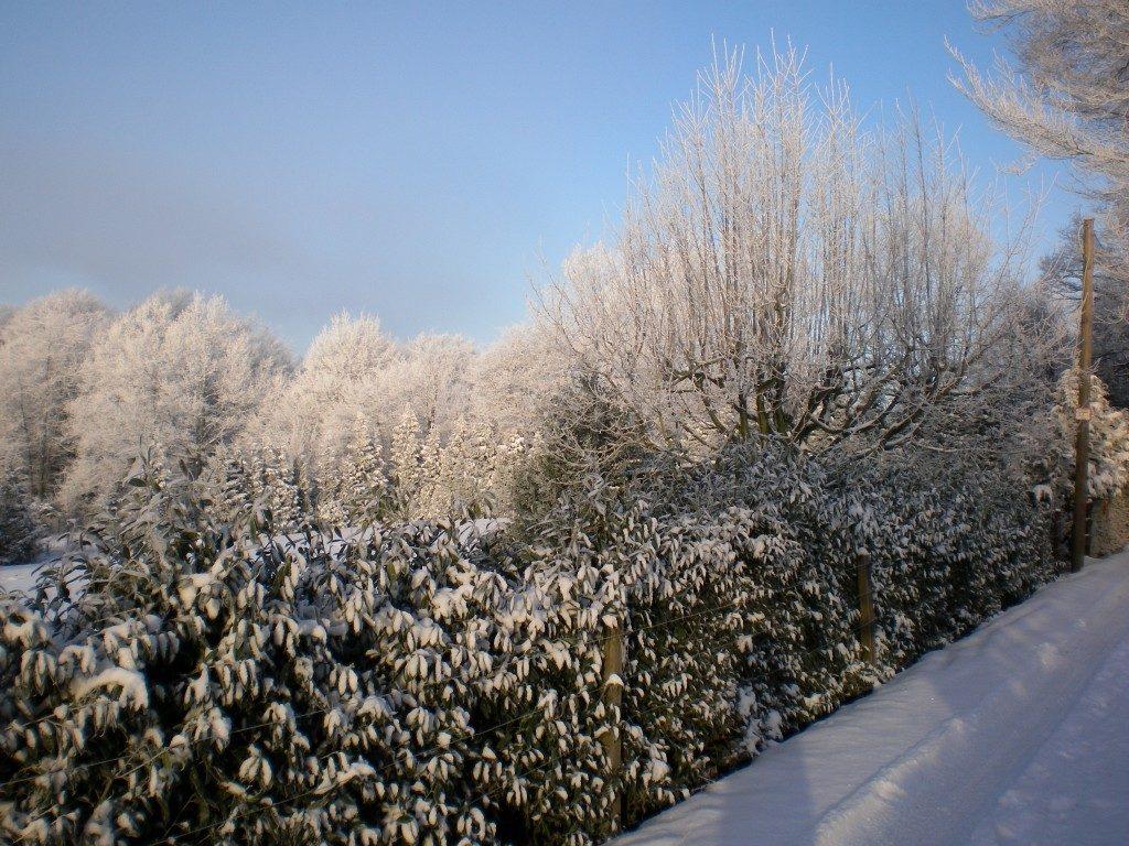 Weihnachten - Fest des Konsums? Weihnachten - Fest der Liebe, Gedanken zu Weihnachten